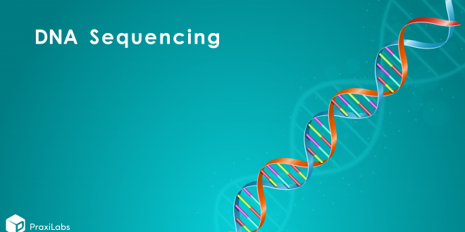 DNA Sequencing: Definition, Importance, Methods, Facts, and More