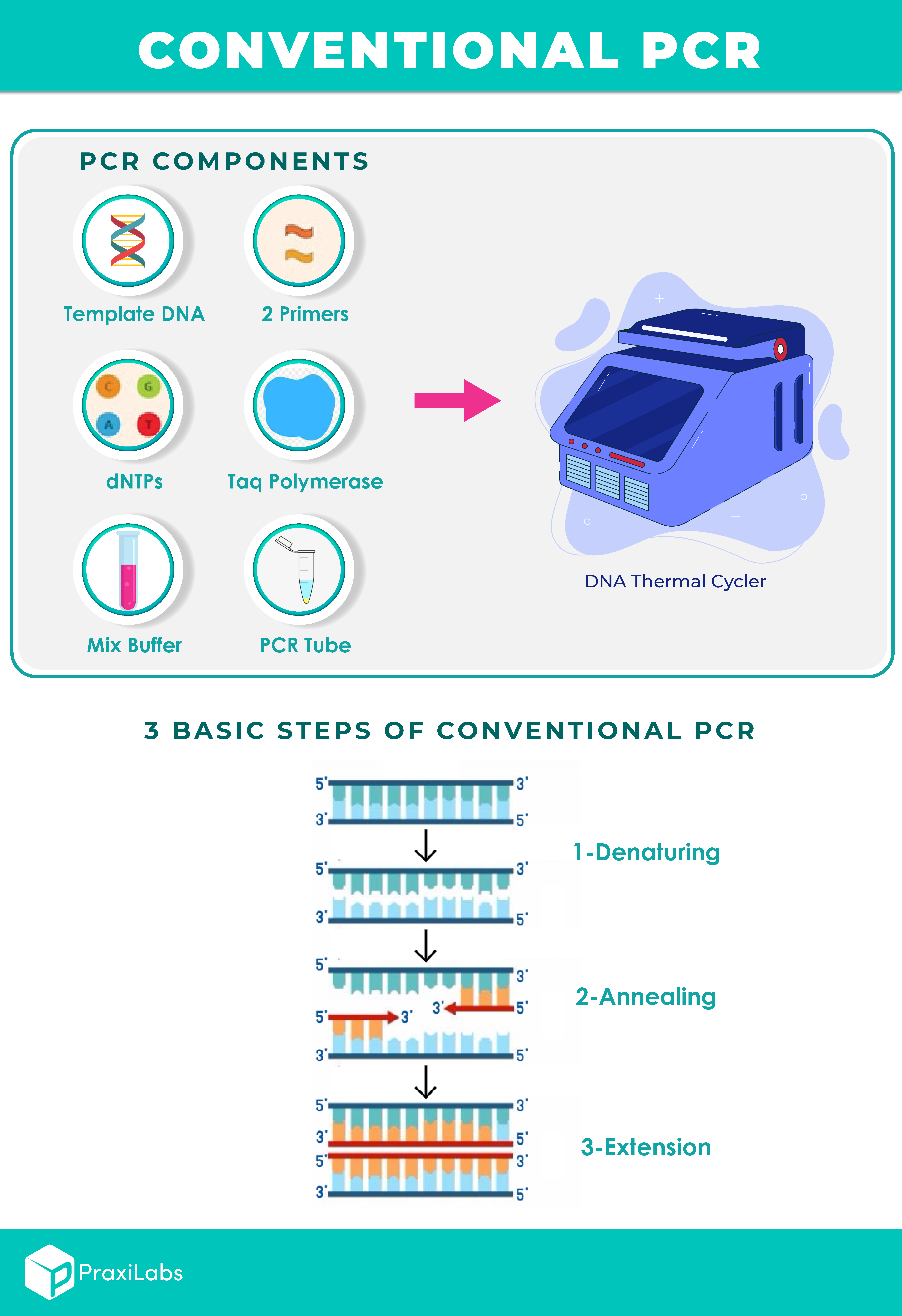 PCR steps and components
