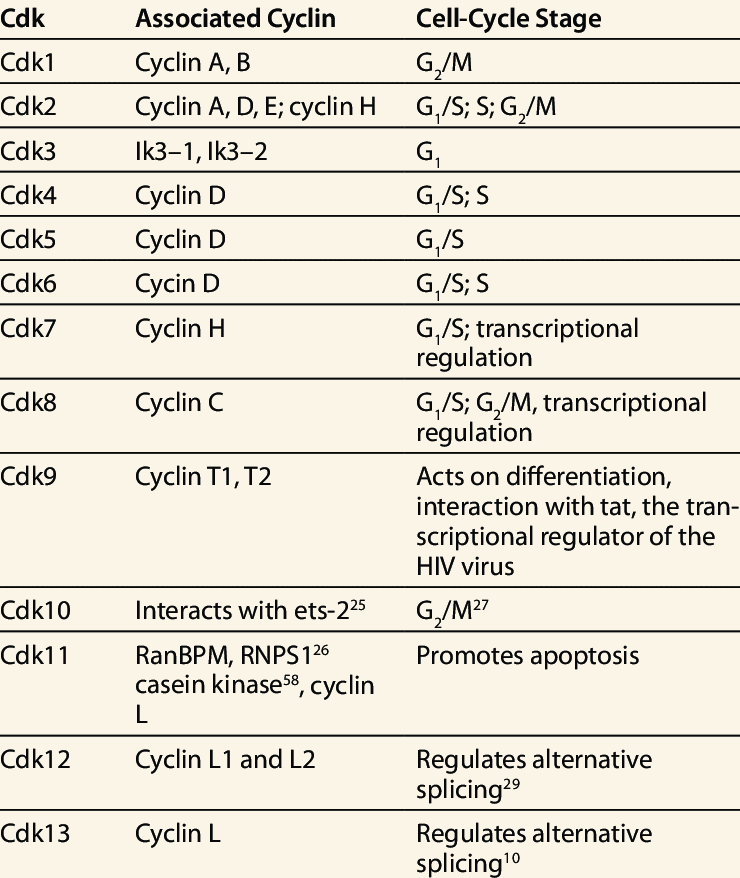 Cyclin – Cyclin dependent kinases (Cdk) complexes formed during cell cycle reguation and their functions