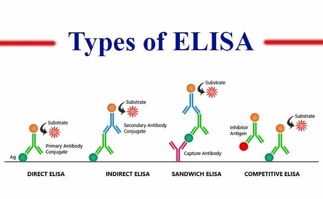 Types of ELISA Test